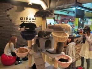 cat-cafe-4